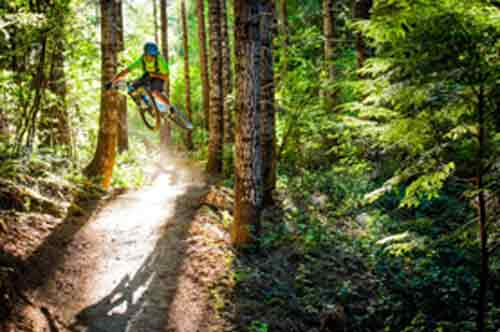 Mountain bikier jumping on wooded trail