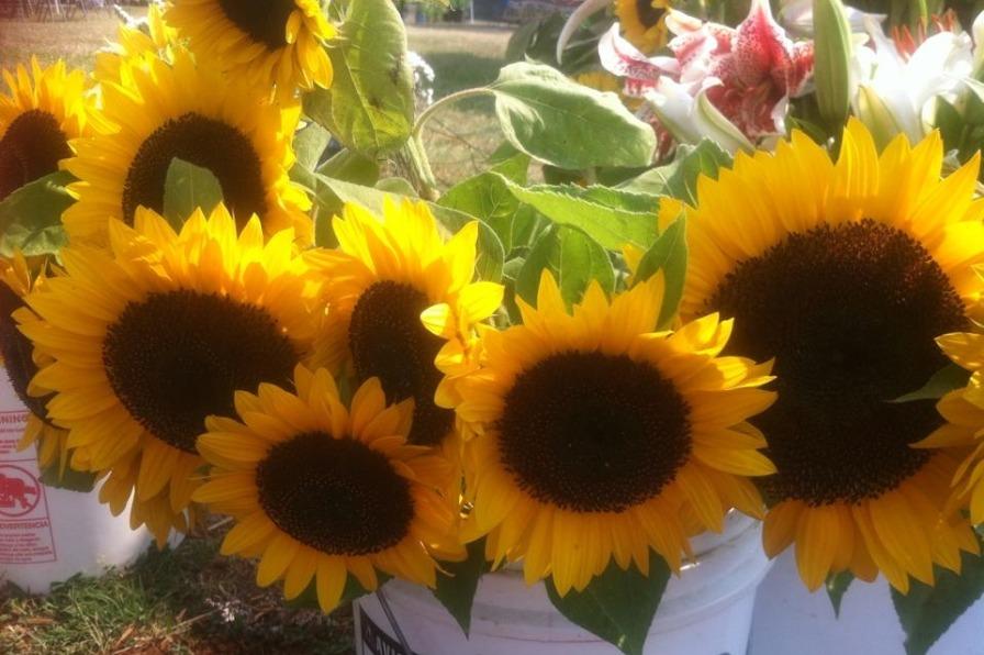 Sunflowers at the Estacada Farmers Market