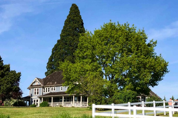 Barn Kestrel victorian home and sequoia