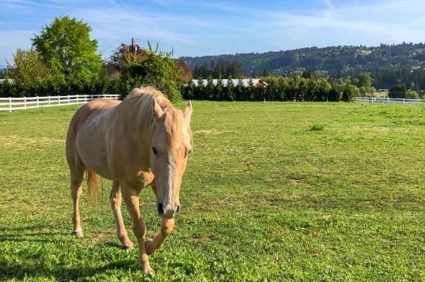 horse from barn kestrel