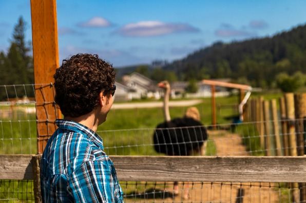 Visitor admiring an ostrich at Triskelee Farm in West Linn