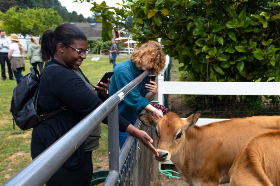Woman petting a cow at Kitchen at Middleground Farms