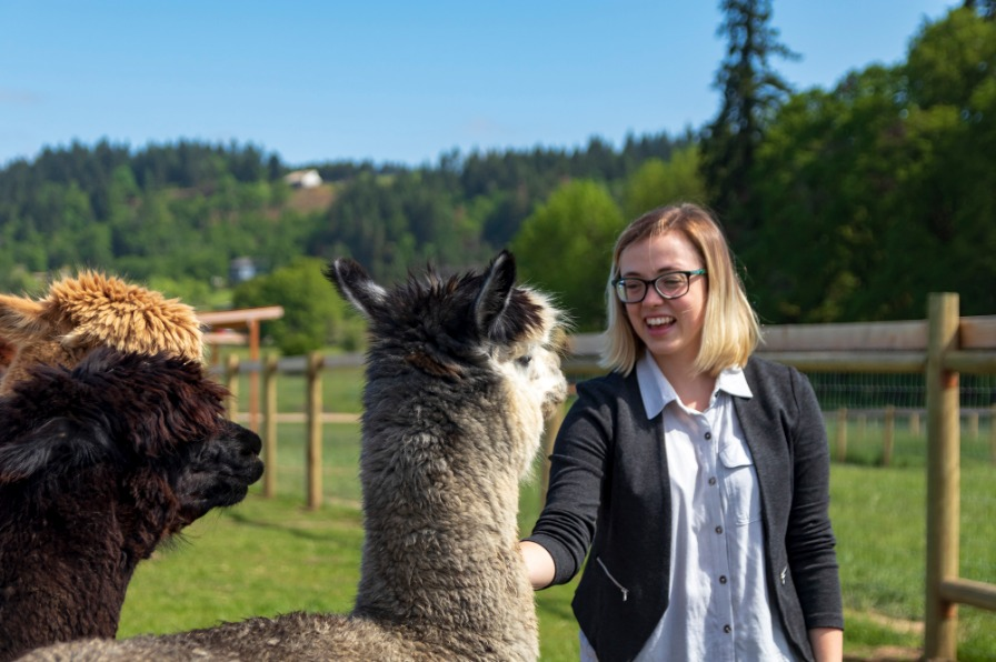 petting an alpaca at Triskelee Farm in West Linn