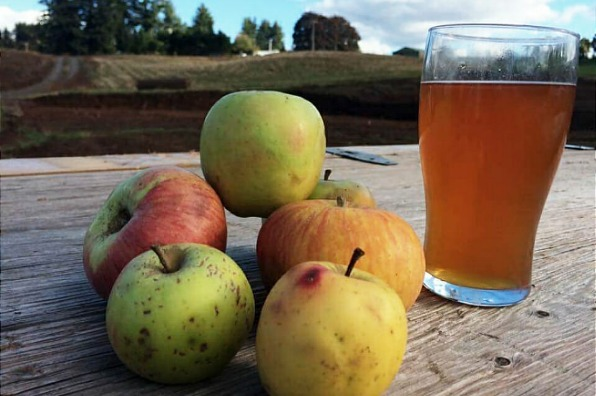 Apples and a glass of cider at Stone Circle Cider