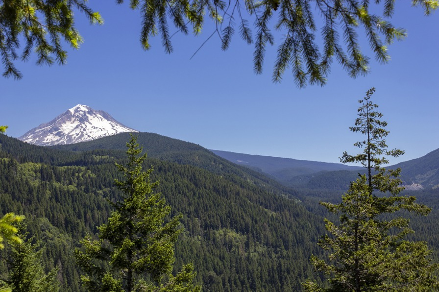 Mt. Hood from Flag Mountain Hike