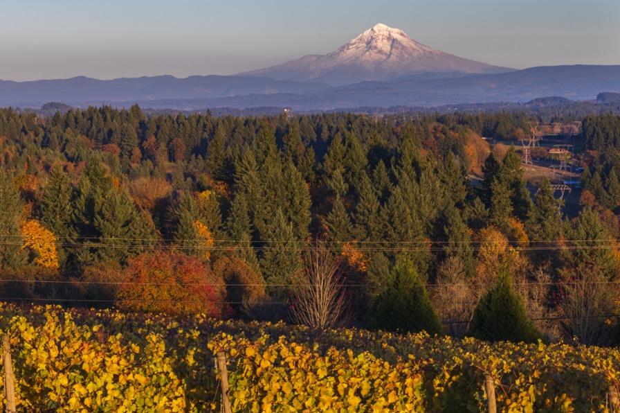 Pete's Mountain Vineyard during fall