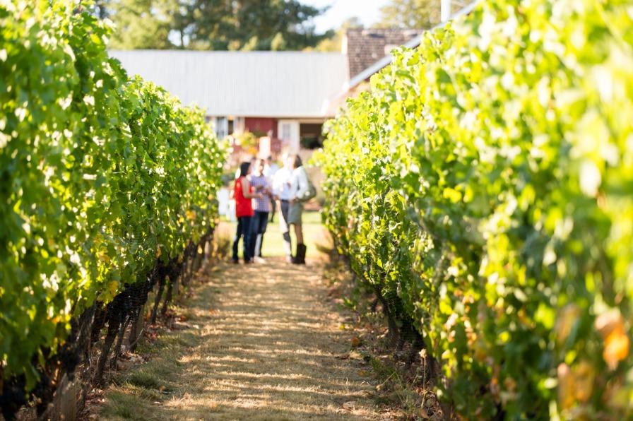 Dinner in the Field, Terra Vina Wines, tour