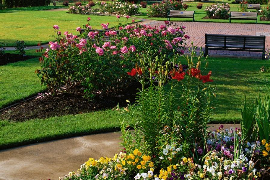 Sara Hite Memorial Rose Garden - Vertical