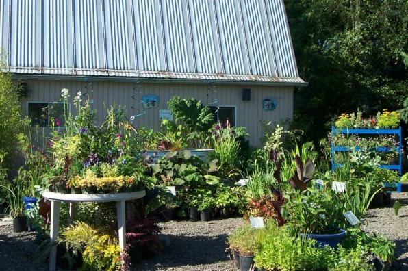 Secret Garden Growers Bog Plants and Nursery Shed