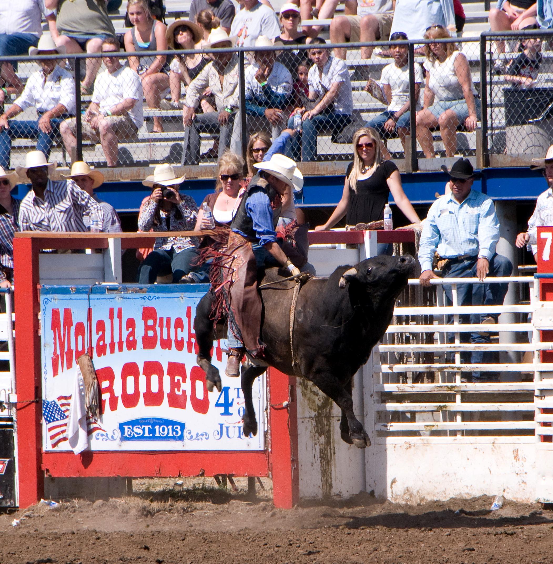 Molalla Buckeroo Bull Riding and Rodeo Sign