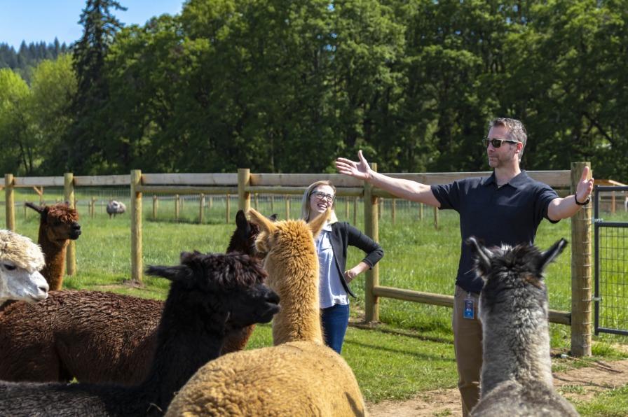 Alpaca audience at Triskelee Farm