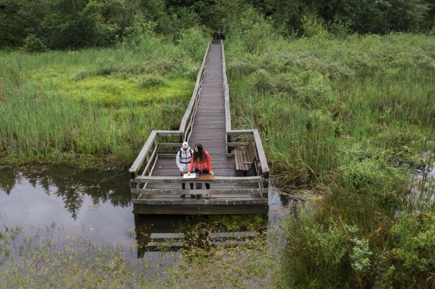 Wildwood Wetlands Boardwalk