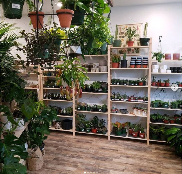 Shelves of small plants at Root and Stem plant shop in Oregon City