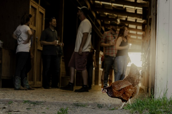 Triskelee Farm Tipsy Tour - chicken in the foreground