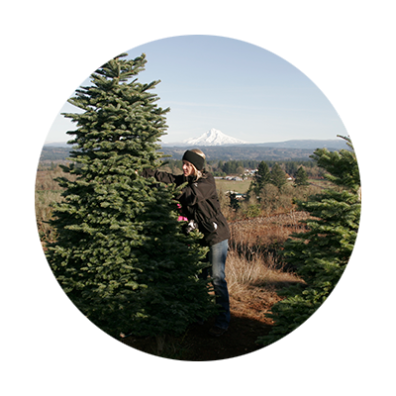 Christmas Tree farm in Estacada with Mt. Hood in the background