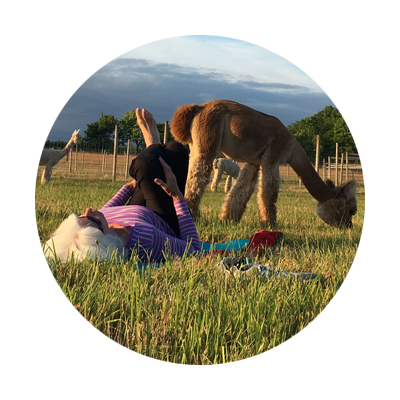 Female doing a yoga pose in the pasture with alpacas at Alpacas at Marquam Hill Ranch in Oregon's Mt. Hood Territory