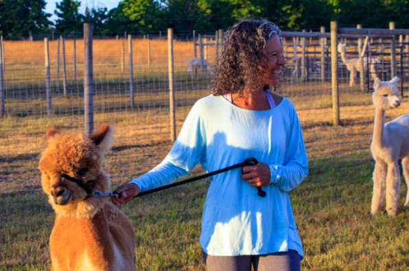 Woman leads alpaca through fenced pasture to area where a yoga class is about to take place at Alpacas at Marquam Hill Ranch
