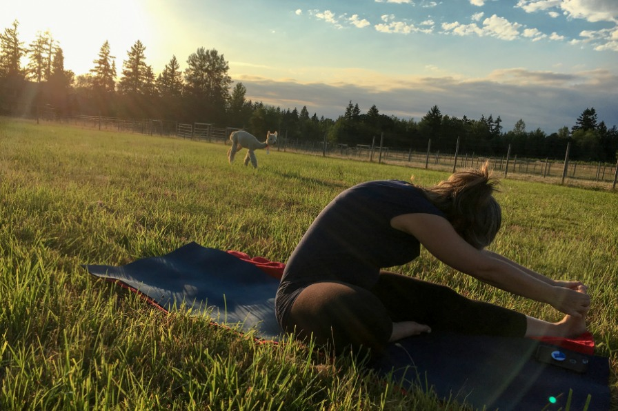Young woman on a yoga mat doing a yoga pose out in the pasture with an alpaca behind her in the late afternoon