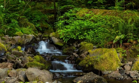 Small waterfall along the Clackamas River Trail in Mt. Hood National Forest