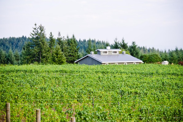 Only the roof and top windows of the tasting room at Beckham Estate Vineyard can be seen over the mass of green grape vines
