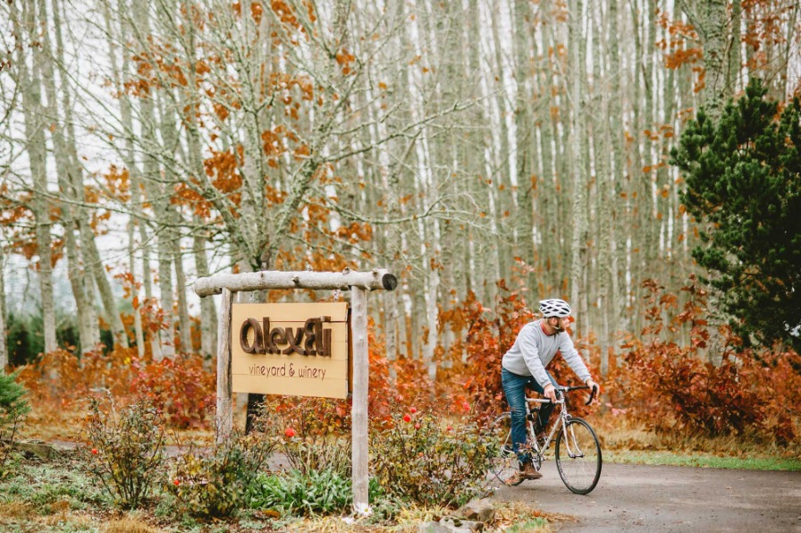 Cyclist enjoying the fall foliage on the entrance drive to AlexEli Vineyard & Winery south of Molalla