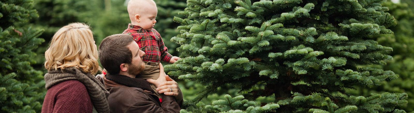 u cut christmas trees put the u in holiday fun