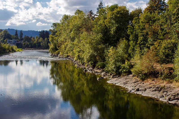 High white clouds and riverbank trees reflect on the water of the Clackamas river near Gladstone