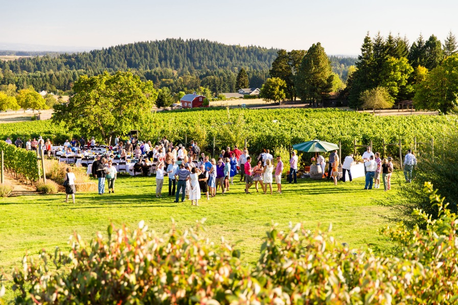 Sunny summer evening with 100 guests on Terra Vina Wines' lawn surrounded by rows of grape vines for Dinner in the Field