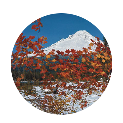 View of snow-covered Mt. Hood and Trillium Lake seen through red, orange and gold leaves of vine maples on the lake's edge.
