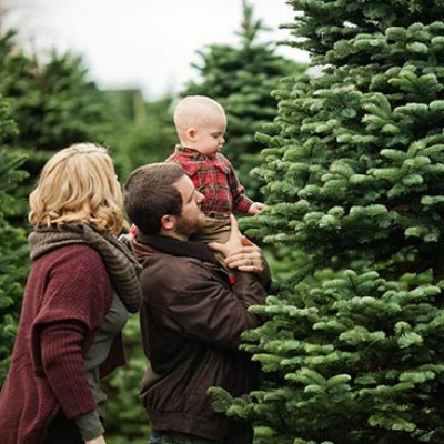 Family with dad holding 2-yr old son on his shoulders stand among 10 ft.+ Christmas trees looking for the perfect one to cut