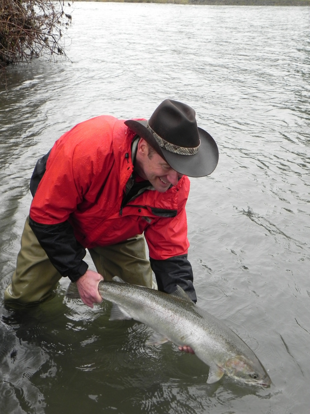 Wild steelhead must be released. Gary Lewis caught this Clackamas River steelhead on a cerise jig beneath a float. Photo by Jennifer Lewis.