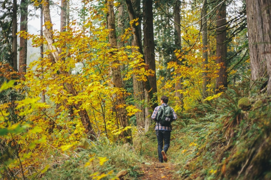 Male hiker with backpack walks along trail in old growth forest enjoying the fall foliage in Oregons Mt. Hood Territory.