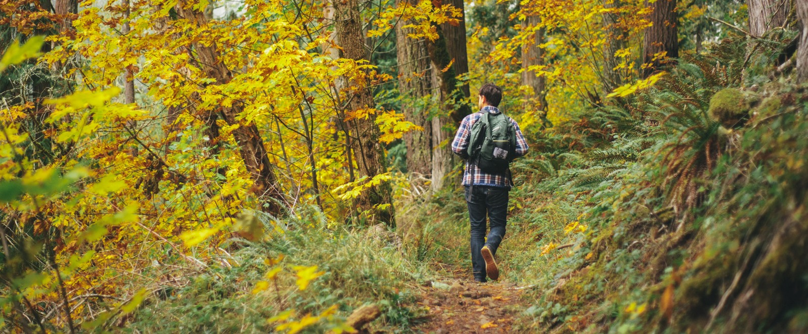 Male hiker with backpack walks along trail in old growth forest enjoying the fall foliage in Oregon's Mt. Hood Territory.