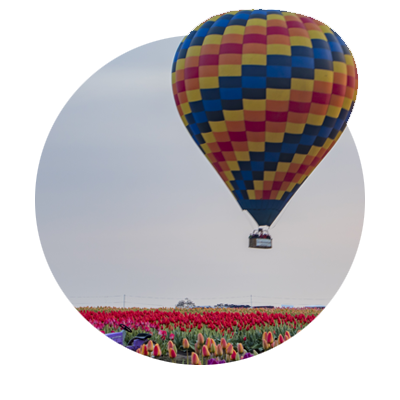 Colorful hot air balloon drifts above field of red tulips at Wooden Shoe Farm Tulip Festival in Oregon's Mt. Hood Territory