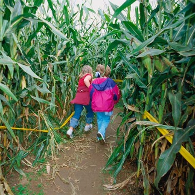 Kids have fun in the corn maze while on an outing to the pumpkin patch to find the perfect pumpkins to take home to carve in oregon's mt hood territory