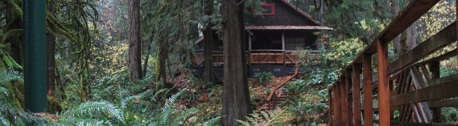 Brightwood's Liberty Lodge vacation home is nestled in a moss covered old growth forest with ferns covering the forest floor.