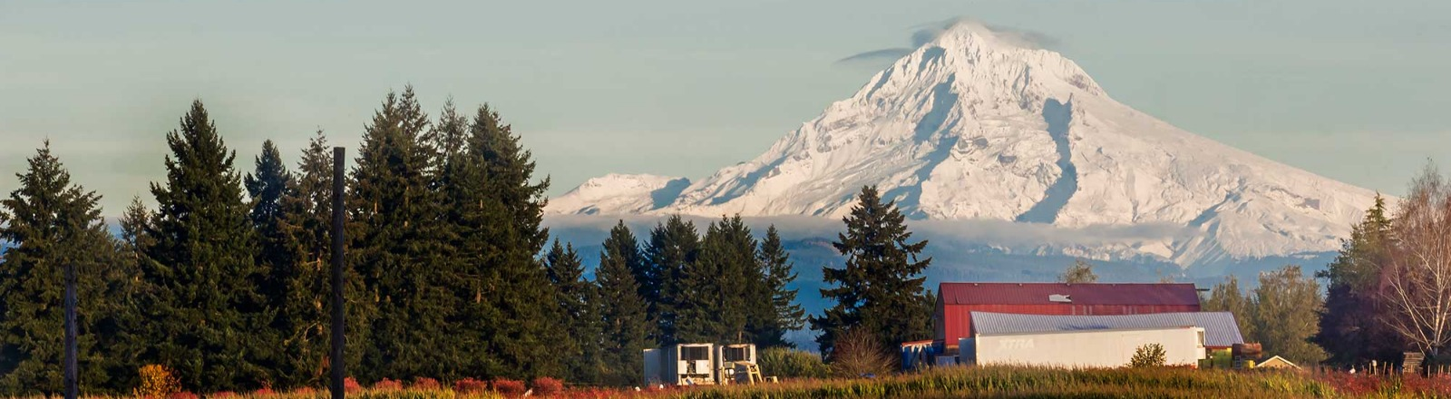 Liepold Farm in Boring corn fall festival with mt hood in the background in oregon's mt hood territory