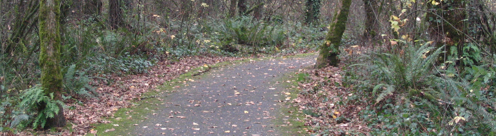Mary S Young Park Path, West Linn