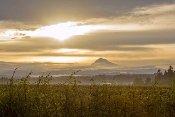 Early morning reveals a misty Mt Hood