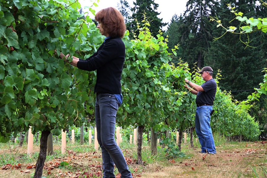 Molly and Darrel Roby check their grape vines at Twill Cellars winery in West Linn in Oregon's Mt. Hood Territory