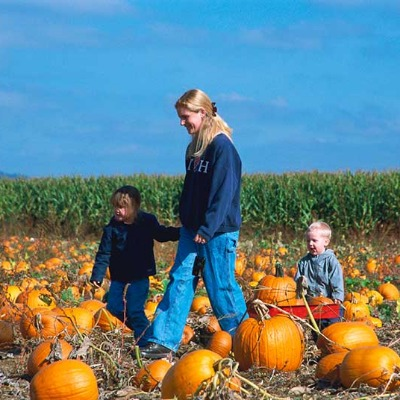 Mom pulls one of her two sons in red wagon through one of the many pumpkin patches found in Mt Hood Territory in the fall looking for the perfect pumpkins to take home and carve.
