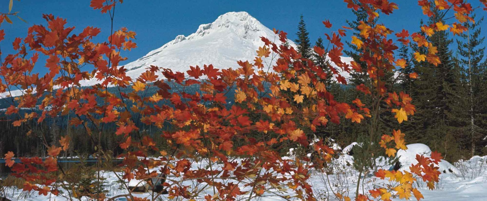 Mt. Hood and vine maples in the snow Trillium Lake Oregons Mt Hood Territory