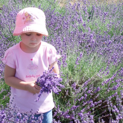 Little girl dressed in a pink hat and top stands in the lavender field picking fresh lavender in Oregon's Mt. Hood Territory.