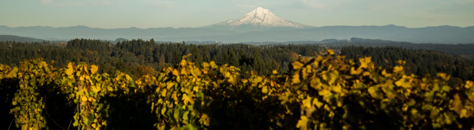 view of Mt. Hood and vines below from Pete's Mountain Vineyard in Oregon's Mt. Hood Territory