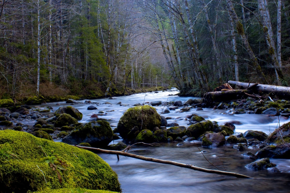 Moss covered rocks withe the Zigzag River flowing through them and forest on either side on the Pioneer Bridle Trail.