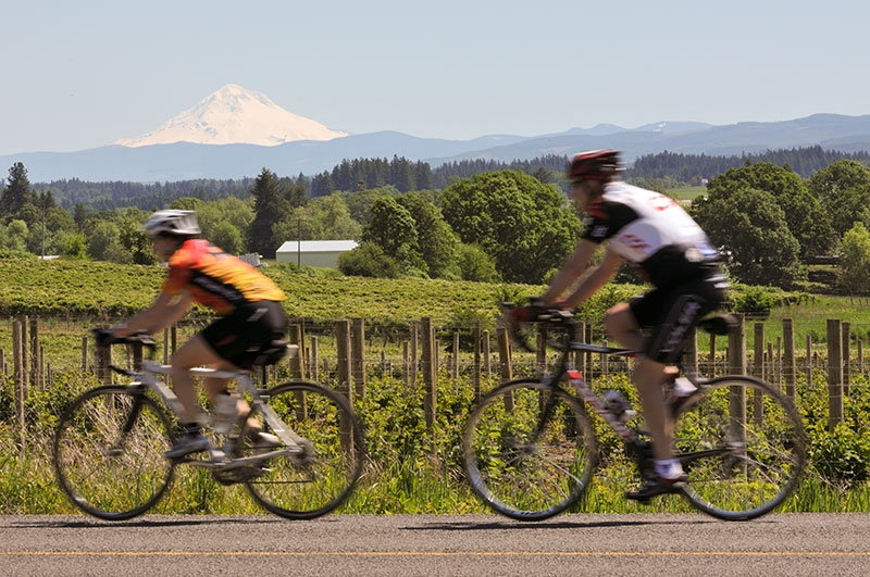 Two bicyclists on Pioneer Century Ride passing vineyard with Mt. Hood in far distance against a June blue summer sky