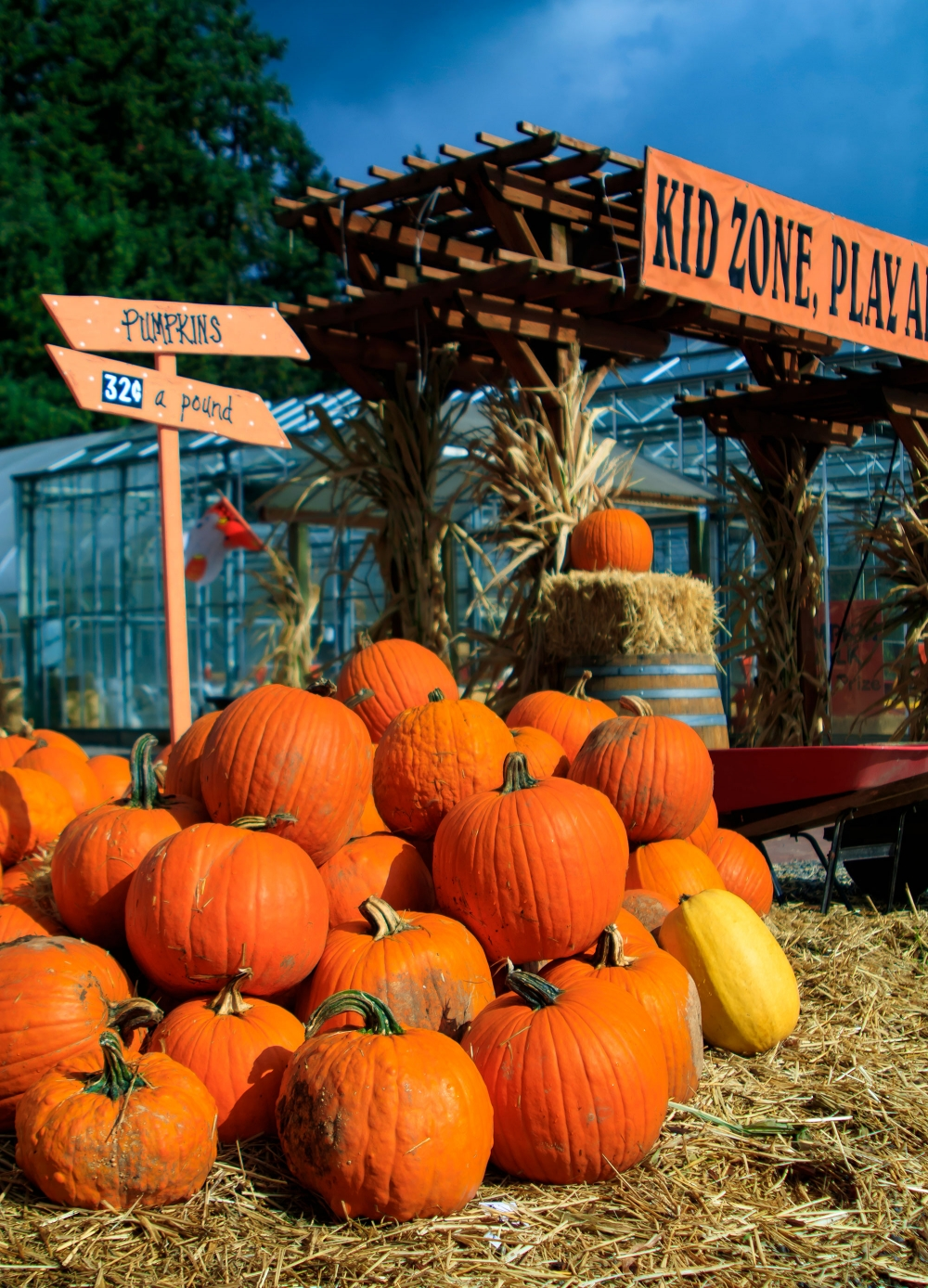 Kid Zone Play Area and a big pile of pumpkins stacked up for sale at Fir Point Farms October Harvest Festival