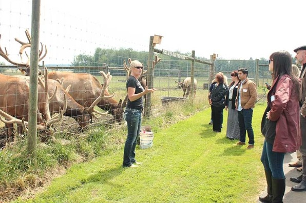Owner of Rosse Posse Acres elk farm in Molalla stands in front of elk feeding and educates a tour group about raising elk in oregon's mt hood territory