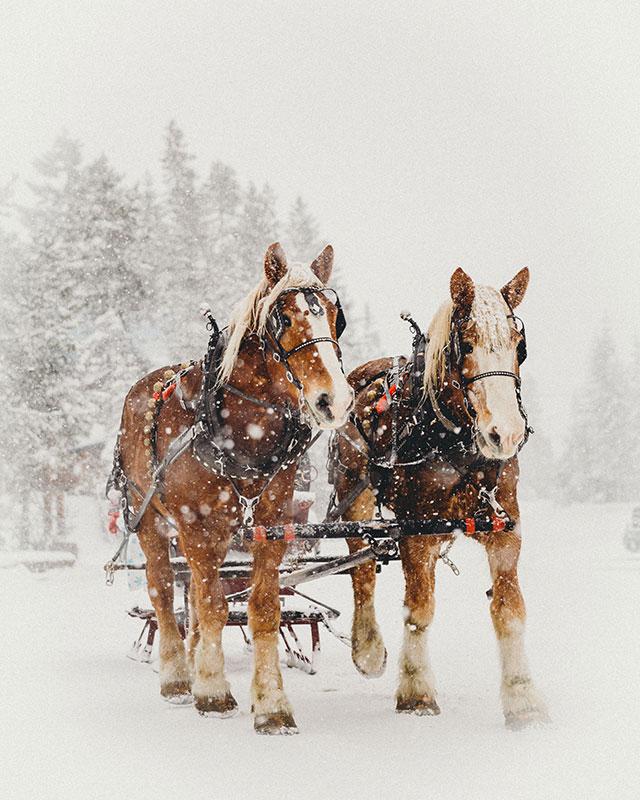 sleigh rides oregon s mt hood territory