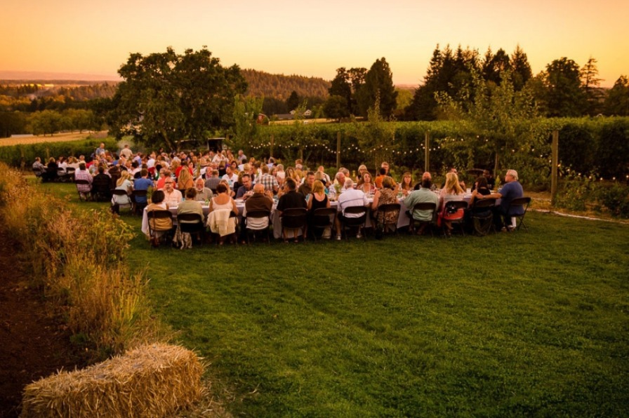 100 Dinner in the Field attendees dine at long tales on Terra Vina Vineyard's lawn with rows of grapes surrounding them